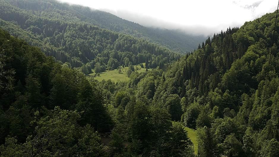 Zaplijenjena 24 kubika drvne građe
