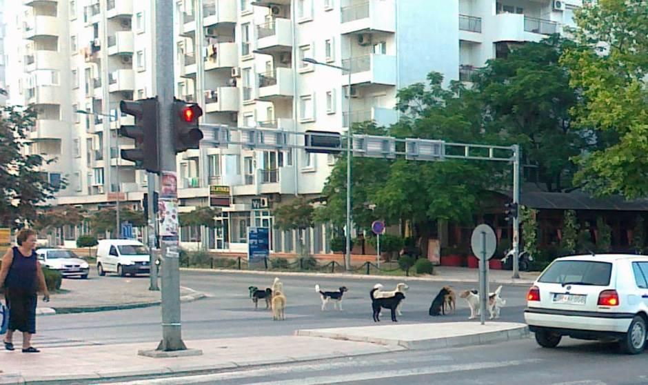 psi lutalice Bar