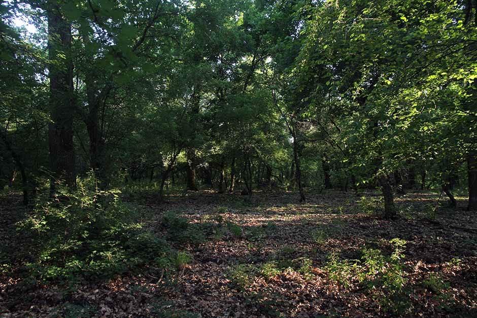 gornje podunavlje, podunavlje, močvara, bara, priroda, prirodne lepote, monoštor, atar, šuma