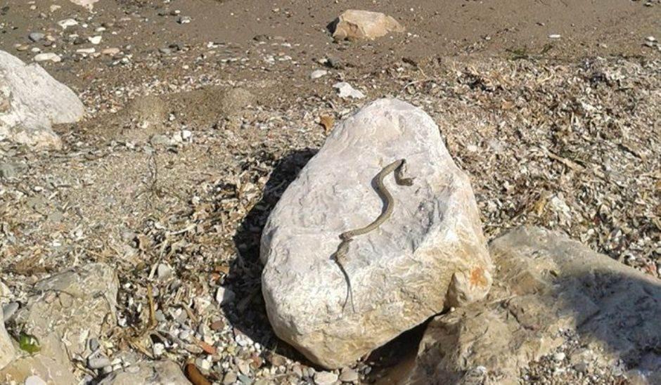 Zmija na gradskoj plaži u Baru!