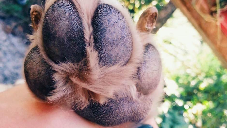 Dogovorene aktivnosti za predstojeće čipovanje pasa