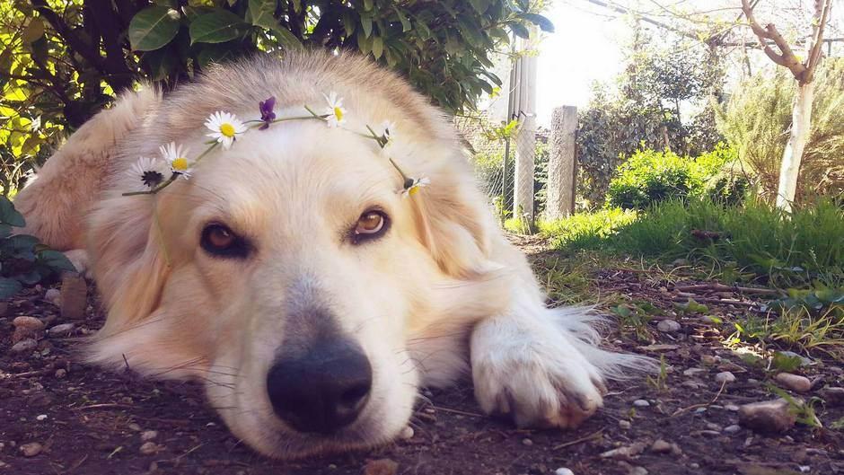 Pas, ljeto, sunce, rijeka, kupanje, vrućine, ljubimac, kućni ljubimci, kućni ljubimac, psi