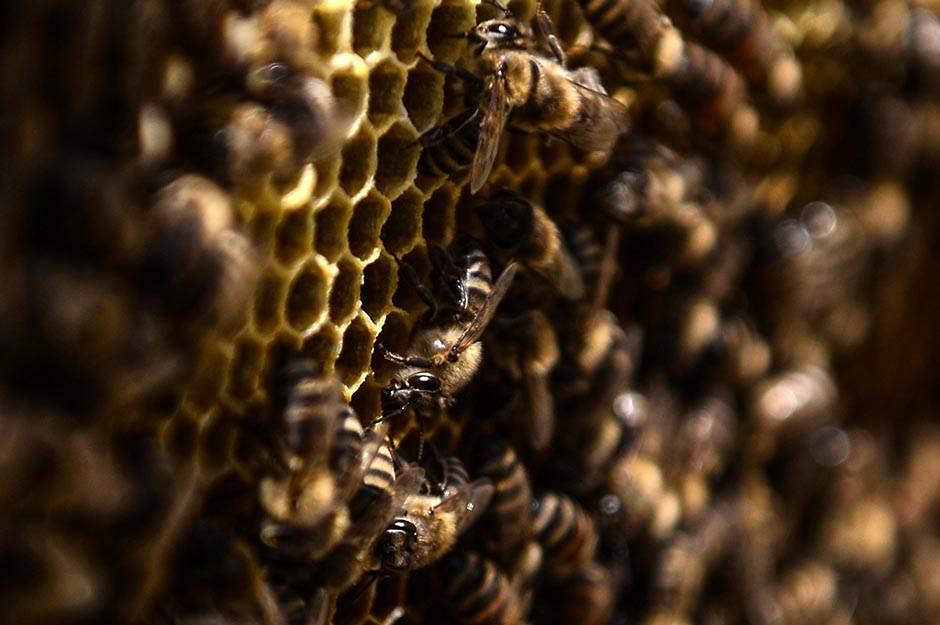IZAZOV: Golim du*etom na pčelinjak! (VIDEO)