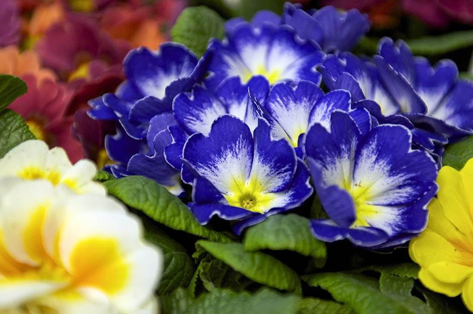sajam, cveće, cvet, 8. mart,