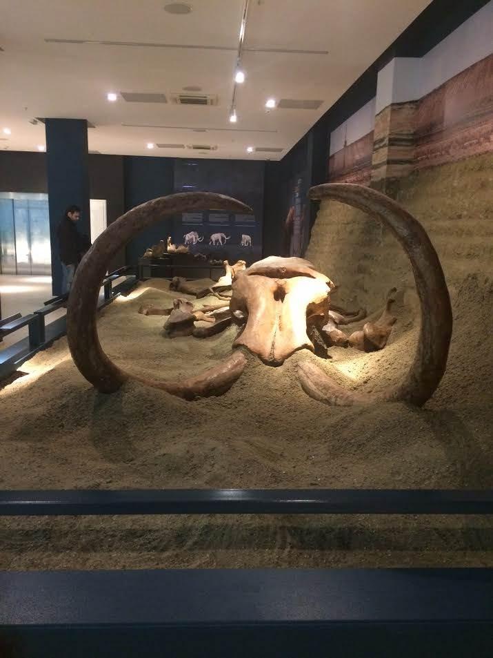 mamut, skelet