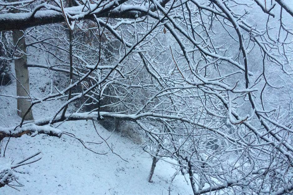 zima,sneg