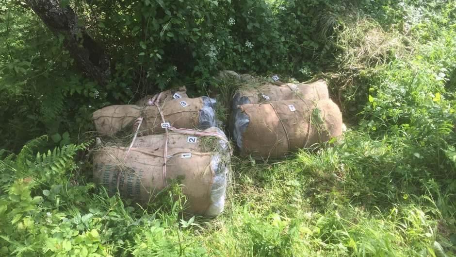 U Gusinju pronađeno 120 kilograma skanka