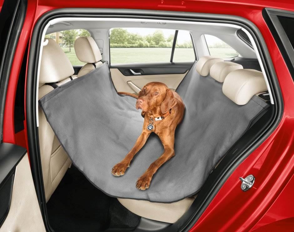 pas, kućni ljubimac, automobil