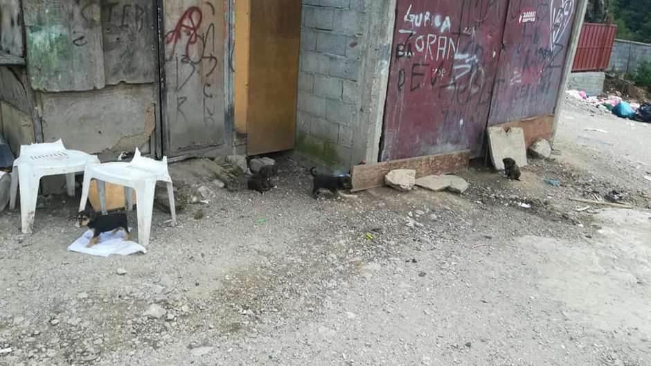 Rožaje - napušteni psi