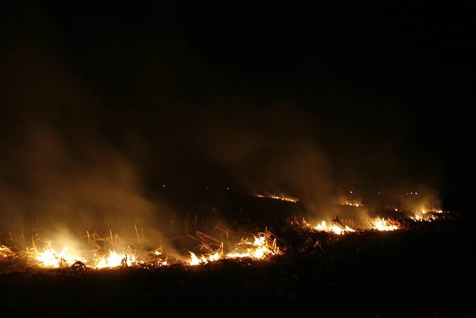 požar vatra rastinje plamen požari