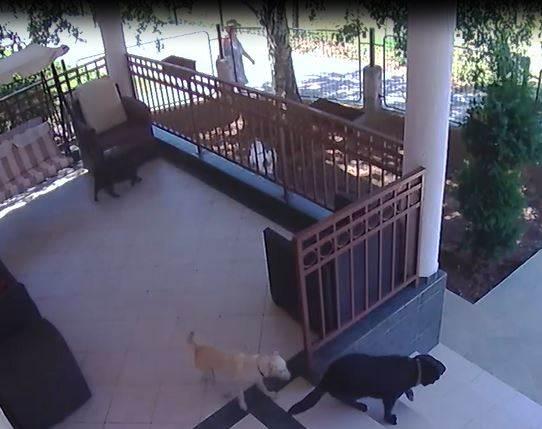 ZLOČIN: Snimljena kako baca otrov psima! (VIDEO)