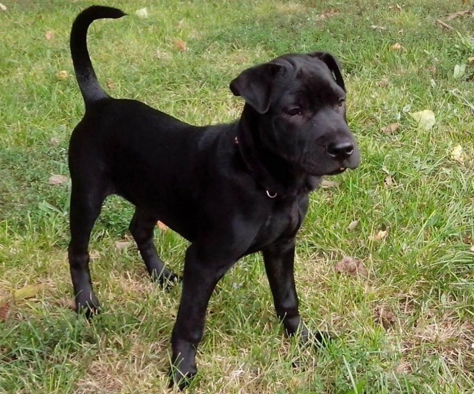 pas psi životinja životinje kućni ljubimac kuče
