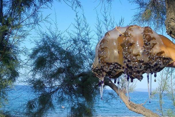 meduza meduze