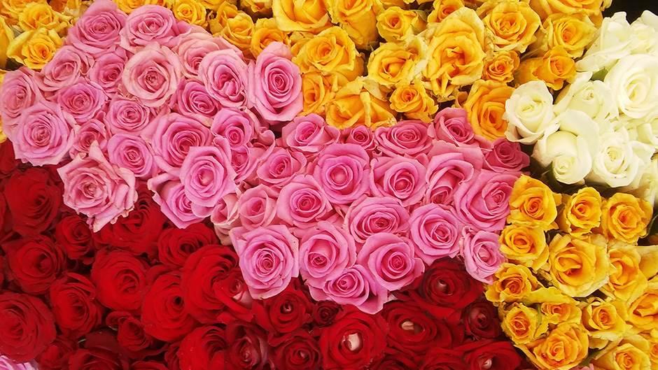 ruže, ruža, cveće