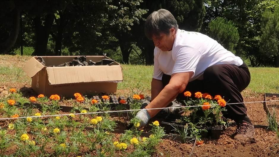 Podgorica je cvijetna i zelena zahvaljujući njima VIDEO