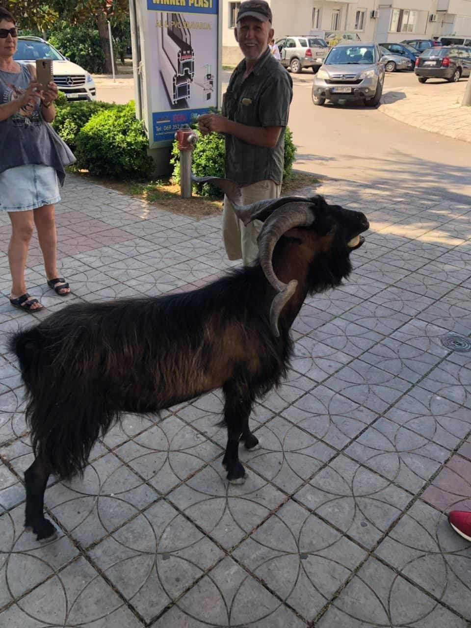 FOTO UBOD: Divokoza se prošetala centrom Bara!
