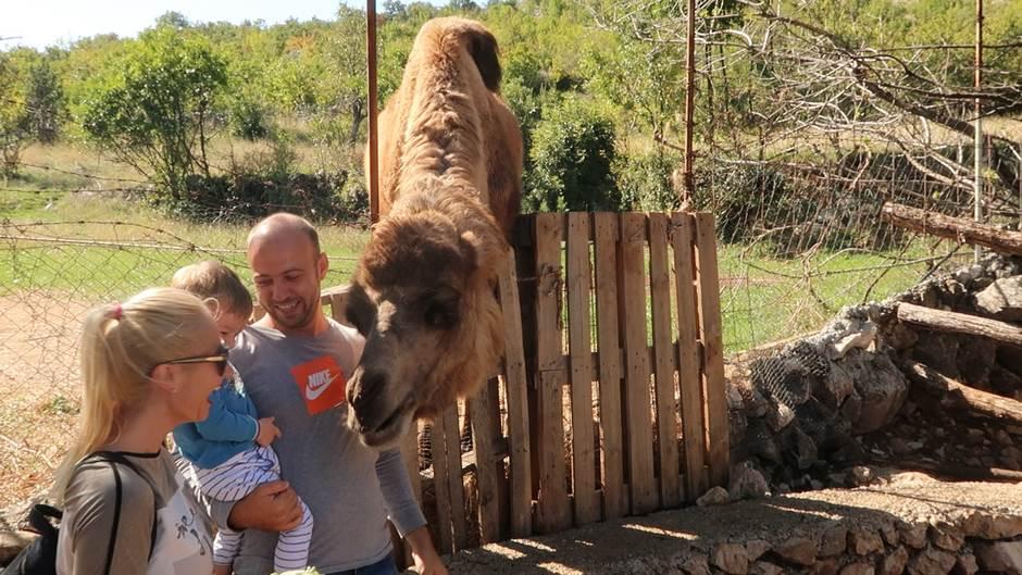 životinje, kamila, prihvatilište za životinje