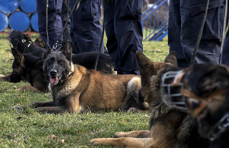 psi, policija, beograd
