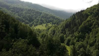 planina, šuma, drveće