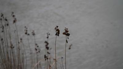 suva trava, obala, jesen, zima, voda, Vrbas, rijeka