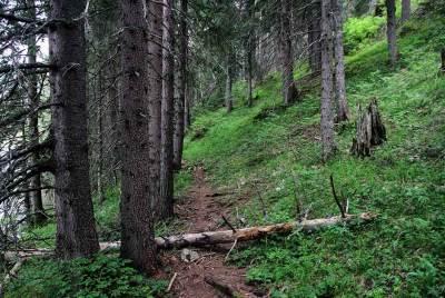 žabljak, durmitor, planine, priroda, zelenilo