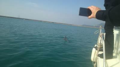 Delfin u barskoj luci