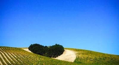 ljubav, srce, priroda, vinograd, zelenilo
