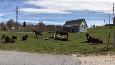 konji Žabljak odmor selo livada konj