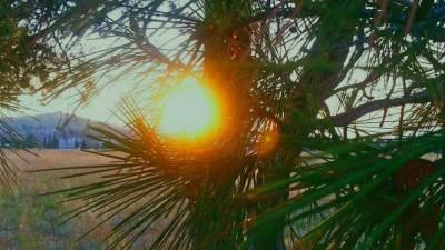 sunce zalazak priroda Podgorica drveće