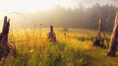 šuma,Bjelasica,Crna Gora, magla,jutro,sunce ljeto,priroda