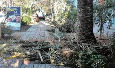 orezivanje palmi