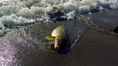 Riba, krivolov