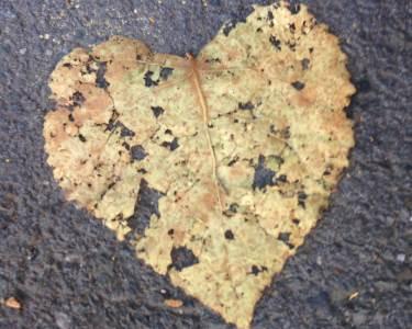 srce, list, ljubav