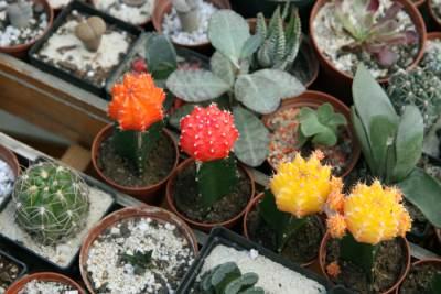 Cveće, Izložba cveća, Park Manjež