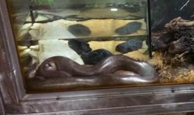 smuk,zmija