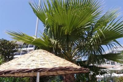 plaža, palma, suncobran, more, leto