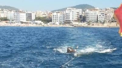 leš životinje, krava pluta u moru