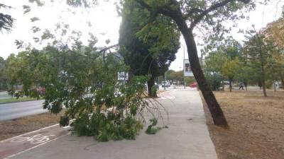Podgorica vjetar grane oluja