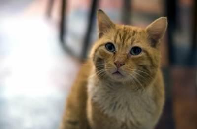 mačka, mačke, macka, kućni ljubimci