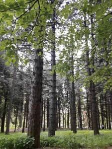 Pljevlja, priroda, šuma, cvijeće, drvo, drveće