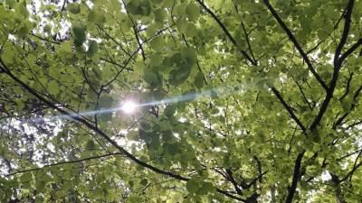 Pljevlja, priroda, šuma, cvijeće, drvo, drveće, sunce, vrijeme, lipa, sun