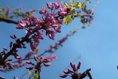 Cveće Proleće Miljana Dašić