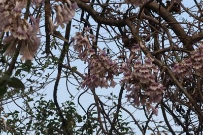 Cveće Vremenska prognoza