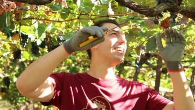 vino, proizvodnja vina
