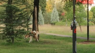pas, čišćenje za psom, psi,