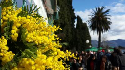 mimoza herceg novi baošići