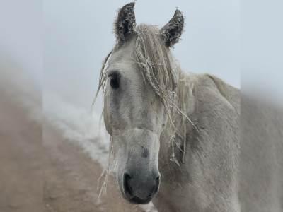 cover konj