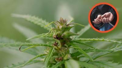 narkomani narkomanija marihuana trava hapšenje policija vutra